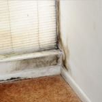 How a Moldy House Can Hurt Your Property Values