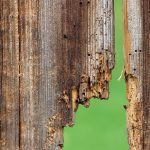 How to Prevent Mold and Wood Rot After Water Damage